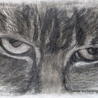 Cat's Eyes - print from original animal drawing