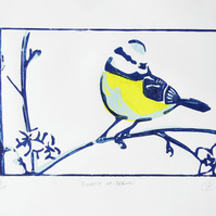 Bluetit in Spring