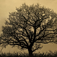 Hedge Oak, linocut style print of an English oak tree on a gold background