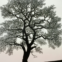 Heart Oak, hand carved original print of a beautiful tree