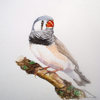 Zebra Finch - original watercolour bird painting, wildlife art