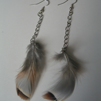 Partridge Feather Earring (Gift Set silver birthday, present, wedding)