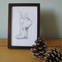 First Step  (original art framed pencil life drawing grass foot feet)