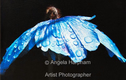Fine Art Photographs