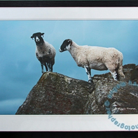 Two Sheep Fine Art Photograph