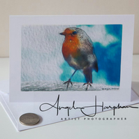 Blank Card Welsh Robin