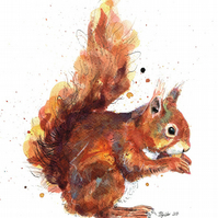 Limited Edition A4 Giclee Print of 'Nibbles' the Squirrel