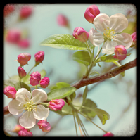 'Modern Vintage' Apple Blossom greeting card