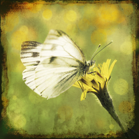 Butterfly In A Meadow Giclée Print