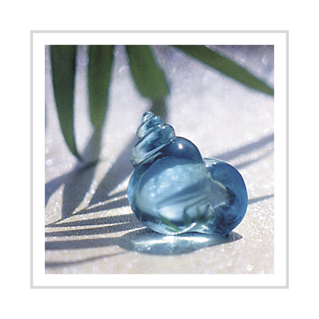 Aqua Shell greeting card