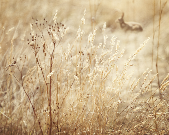 Rabbit in the grass Giclée Print