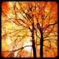 'Modern Vintage' Autumn glory greeting card