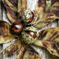 'Three Conkers' Giclée print
