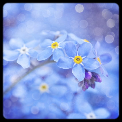 'Modern Vintage' Forget- me- nots greeting card