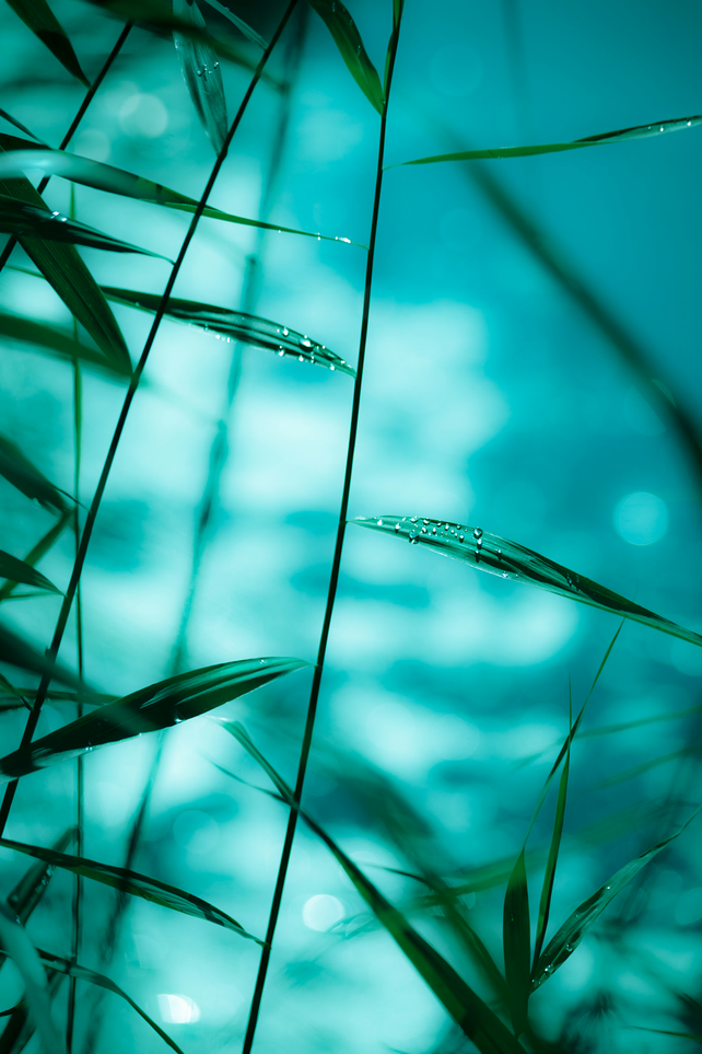 'Raindrops on reeds' Photographic Print