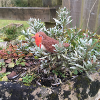 Needle felted robin redbreast, decorative plant stake
