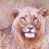 LIONESS, AMONGST THE GRASSES, ORIGINAL NEW FRAMED OIL PAINTING.