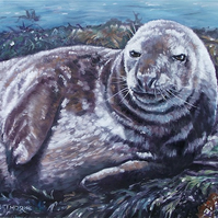 SEAL, SUNBATHING,  ORIGINAL NEW FRAMED OIL PAINTING.