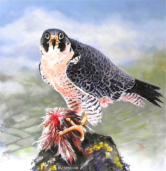 "PEREGRINE FALCON, ""ABOVE THE CLOUDS.""  ORIGINAL FRAMED OIL PAINTING."