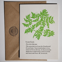 Sweet Cicely Letterpress Card - perfect for gardeners and cooks
