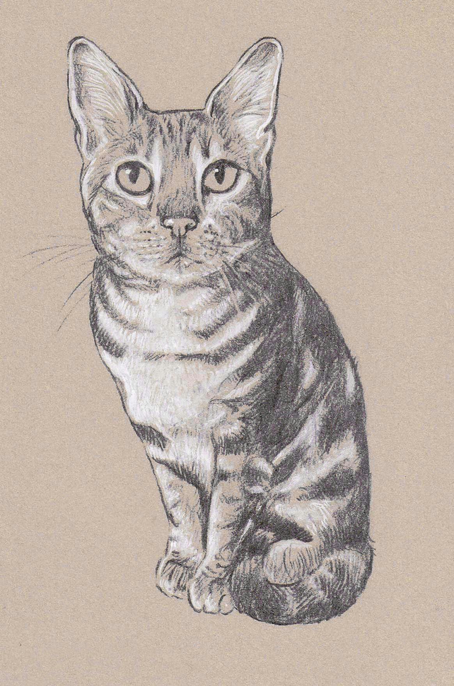 Pet Portrait Print - Highlighted, bespoke illustration.