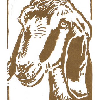 Anglo Nubian Goat - Original Hand Pulled Linocut Print