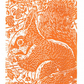 SALE 50% OFF! Squirrel in the Hawthorn - Original Hand Pulled Linocut Print