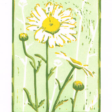 Daisy - White Oxeye Daisy - Original Limited Edition Linocut Print
