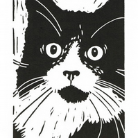 Black and White Cat - Tuxedo - Original Hand Pulled Linocut Print