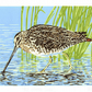 SALE 40% OFF! Common Snipe wading bird - Limited Edition Linocut Reduction Print