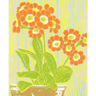 Auricula 'Dusky Orange'  Orange flower limited edition linocut print