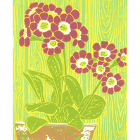 Flower - Auricula 'Autumn Raspberry' original limited edition linocut print.