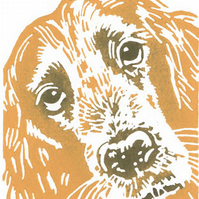 SALE 50% OFF! Golden Cocker Spaniel  Dog - Linocut Print