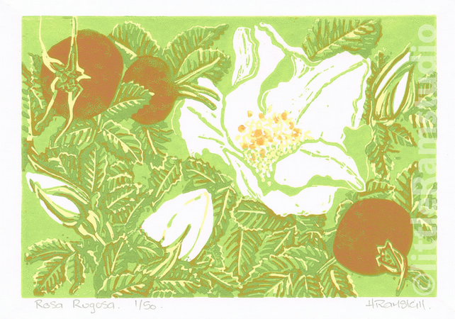 Rosa Rugosa - Original Linocut Reduction Print