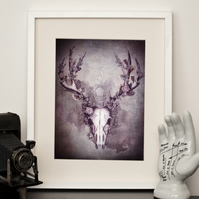 Woodland Stag in Ebony - A4 Print