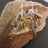 Three Colour Baltic Amber and Sterling Silver Earrings