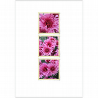 SALE - photo card :: chrysanthemum