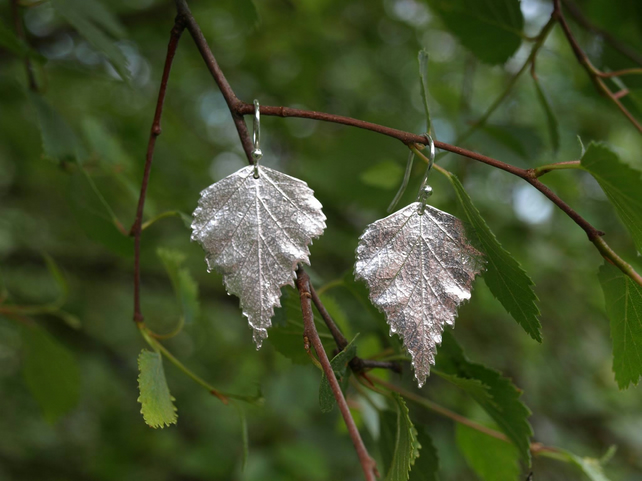 Silver Birch Leaf Earrings Large