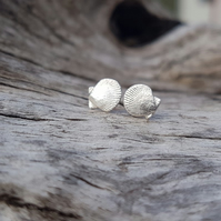 Scallop Tiny Stud Earrings