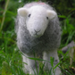 Herdwick sheep - handmade needle felted ewe