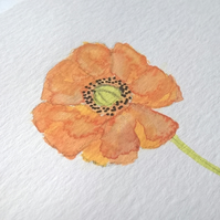 Poppy Watercolour Painting