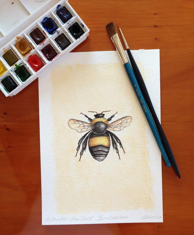 White-tailed Bumblebee - Original Watercolour Painting Picture