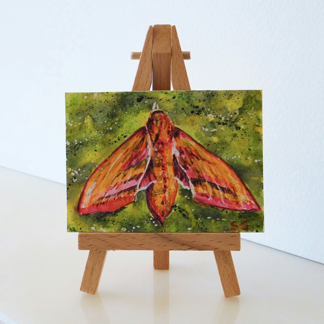 Elephant Hawk Moth ACEO Miniature ORIGINAL Painting