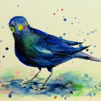 Blackbird watercolour miniature painting ORIGINAL ACEO