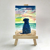 Black Labradoodle at the Beach