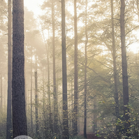 Misty Path - Woodland Photography 8 X 6 Wall Art Mounted Print