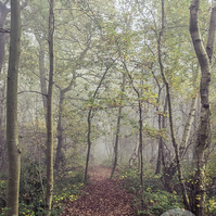 The Long Path - Woodland Photography 8 X 6 Wall Art Mounted Print