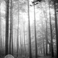 What Lies Within - Woodland Photography 8 x 6 Wall Art Mounted Print