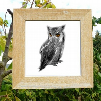 'Owl' - framed photograph