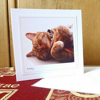 SALE! 4 cards or notelets – 'Cats' (Bobby)